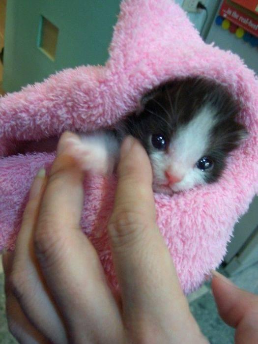 Słodkie kociaki 42
