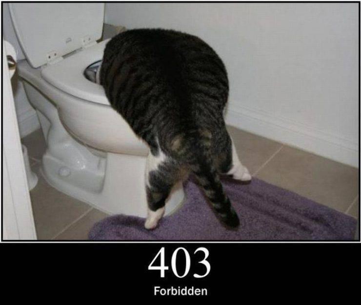 Koty błędów serwerów HTTP 2