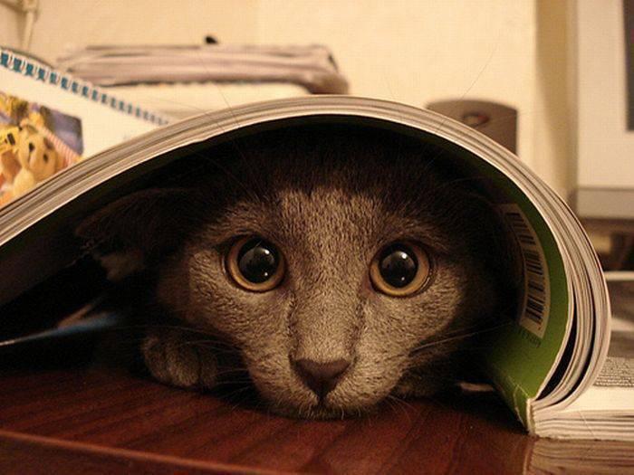 Przyczajone koty 14