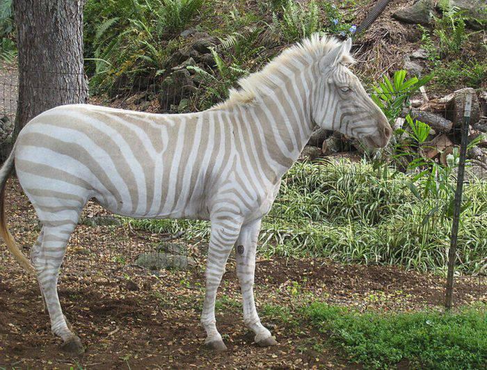 Zwierzęta albinosy #2 2