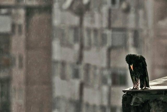 Świat w deszczu 5