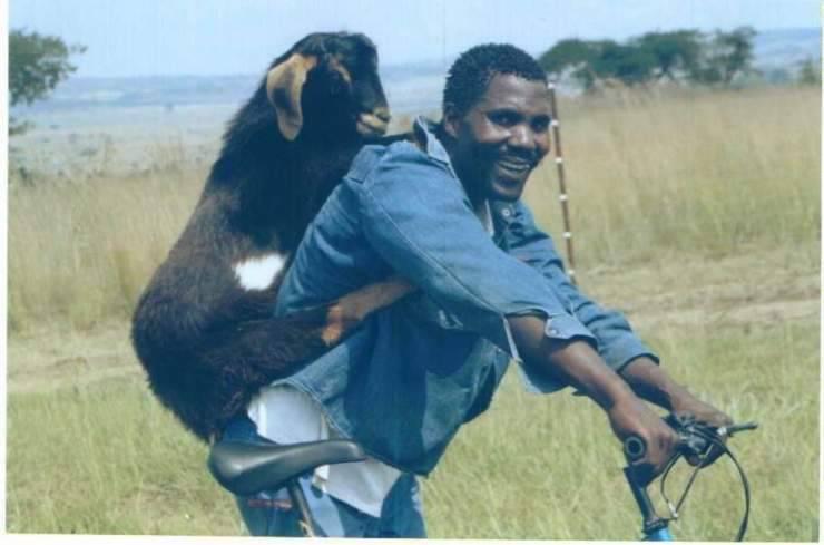 Zdjęcia z Afryki - śmieszne i przerażające za razem 11