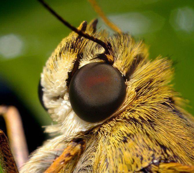 Makrofotografia - owady z bliska 41