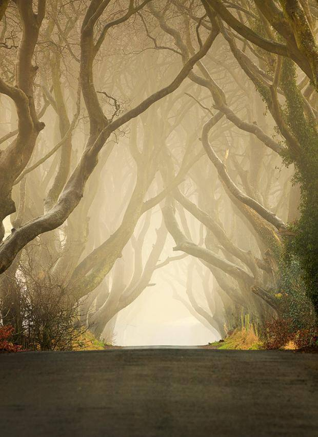 The Dark Hedges 10