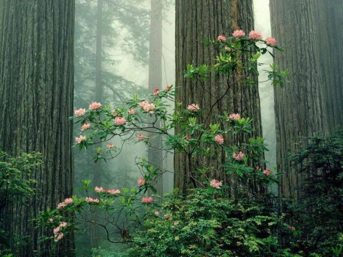 Piękno natury #3 37