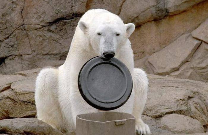 Niedźwiedź polarny Willy 11