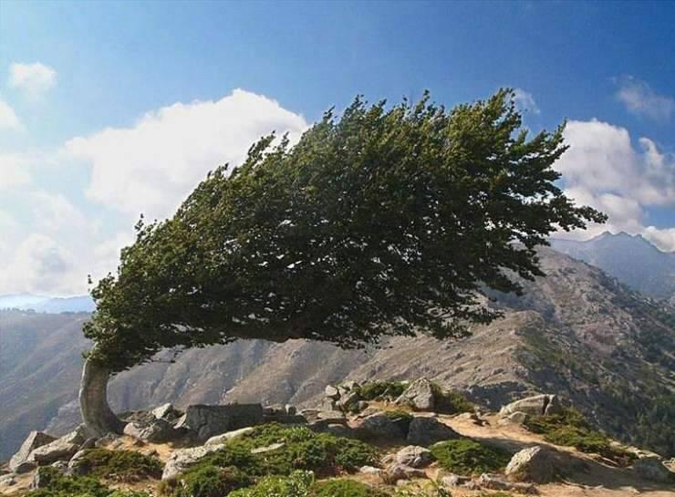 Najdziwniejsze drzewa świata 8