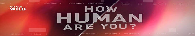 How Human Are You S01E02 The Dating Game HDTV x264-MoTv