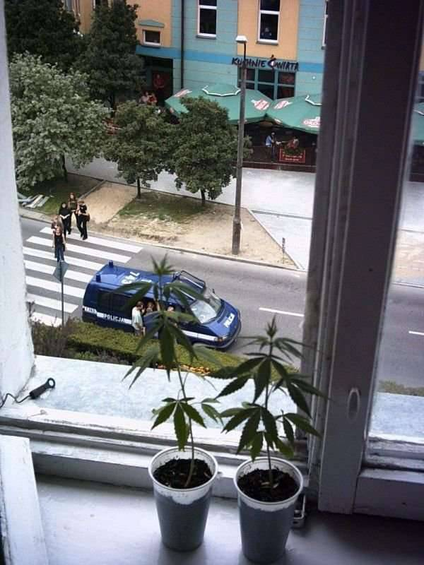 Policja 18