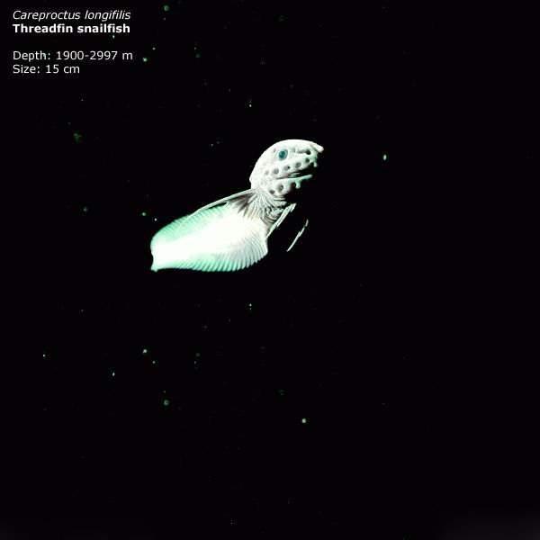Zwierzęta z głębin 20