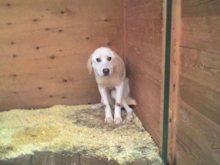 Psy, które dostały szansę na drugie życie 33