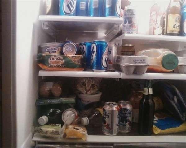 Śmieszne zdjęcia kotów 3