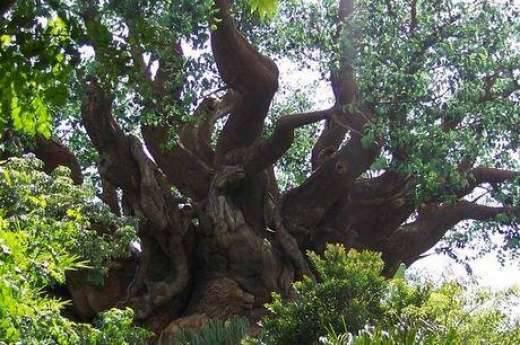 Rzeźba w drzewie 4