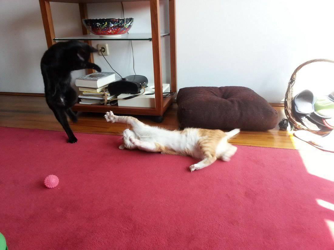 Zabawne zwierzaki #136 11