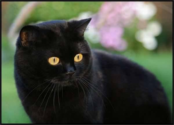 Koty 8
