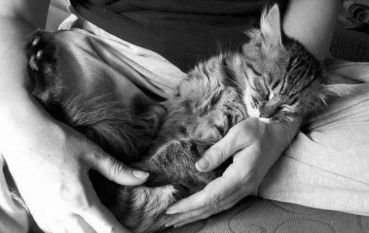 Śpiące zwierzaki #2 10