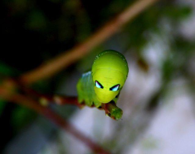 Makrofotografia: owady #3 5