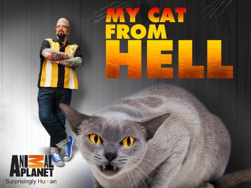My Cat From Hell S10E12 Phillys Forgotten Cats WEB x264-CAFFEiNE
