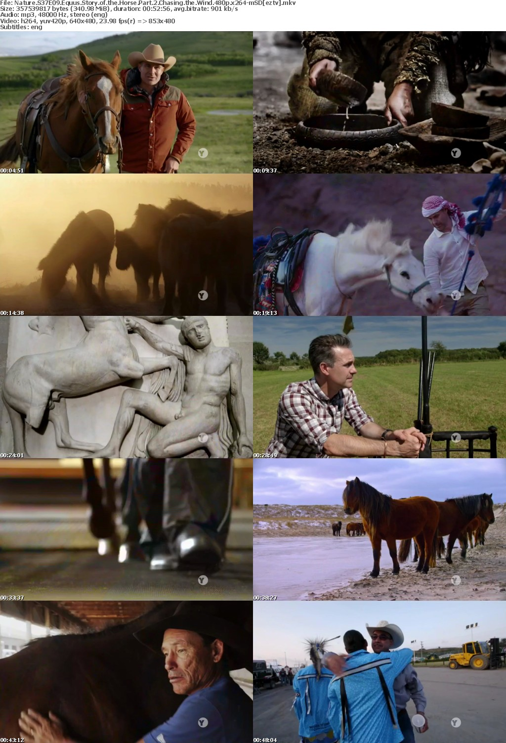 Nature S37E09 Equus Story of the Horse Part 2 Chasing the Wind 480p x264-mSD