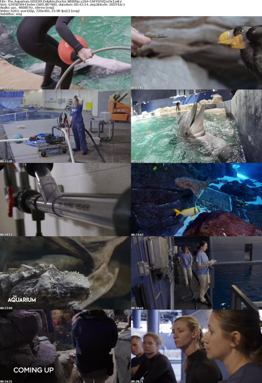 The Aquarium S01E09 Dolphin Doctor WEBRip x264 CAFFEiNE