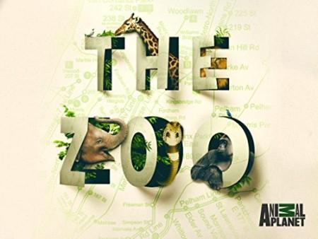 The Zoo US S04E03 Tigers Day at the Dentist 720p HDTV x264-CRiMSON