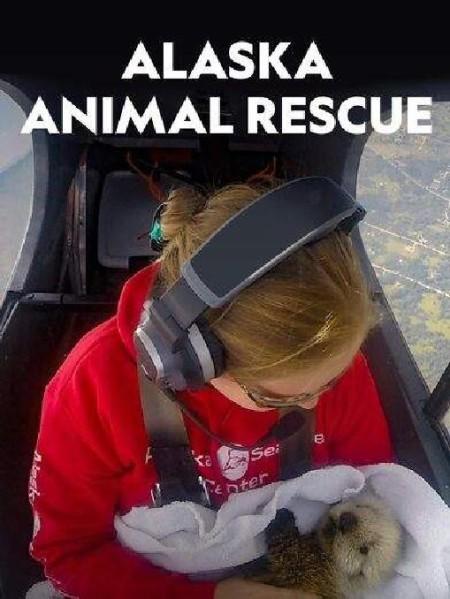 Alaska Animal Rescue S01E03 Seal Pup Voyage 720p WEB x264-CAFFEiNE