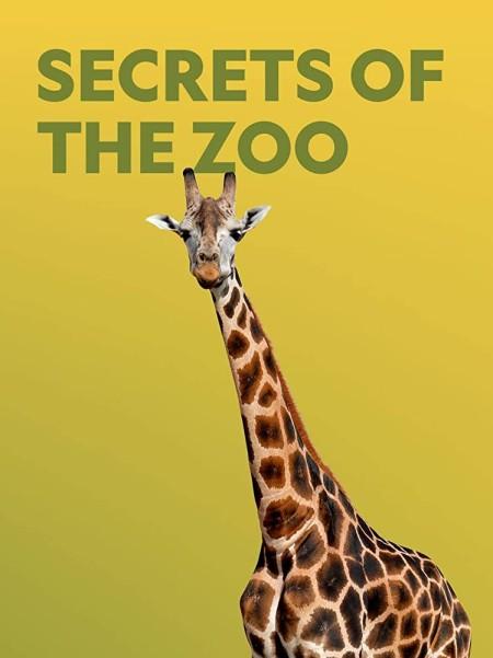 Secrets of the Zoo S03E10 Cheetah Play Date 480p x264-mSD