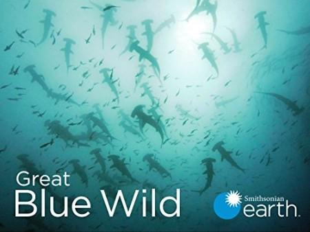 Great Blue Wild S01E06 Bahamas WEB h264-CAFFEiNE
