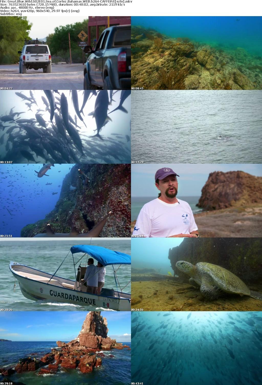 Great Blue Wild S02E01 Sea of Cortez Bahamas WEB h264-CAFFEiNE